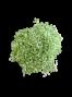 Gehwol  vannisool  roheline 1 KG